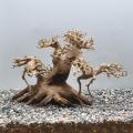 【写真の流木をお届け】水景BONSAI 菩提樹(S) No.2