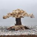 【写真の流木をお届け】水景BONSAI 榕樹(S) No.1