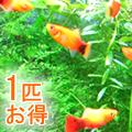 熱帯魚 通販