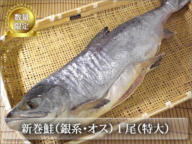 新巻鮭 銀系・山漬・オス 丸1本(特大)