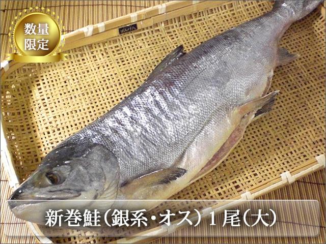 新巻鮭 銀系・山漬・オス 丸1本(大)