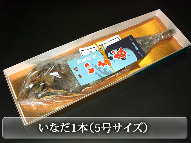 いなだ1本(5号740g前後)