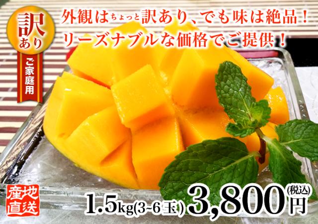 燦々マンゴー 訳あり1.5kg