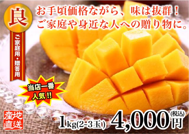 燦々マンゴー 良1.0kg