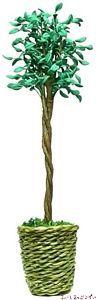 背の高い観賞植物の鉢植え BDA1104