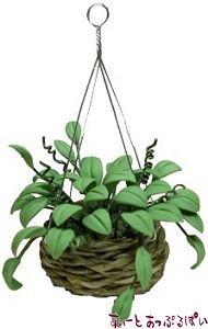 観葉植物のハンギングバスケット BDA1100