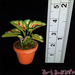 観葉植物の鉢植え その3 SMPLN11