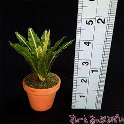 観葉植物の鉢植え その2 SMPLN18