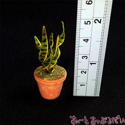 観葉植物の鉢植え その4 サンスベリア SMPLN35