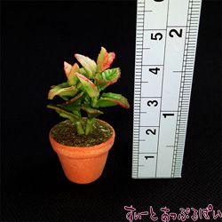観葉植物の鉢植え その1 SMPLN37