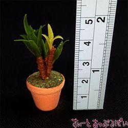 観葉植物の鉢植え その5 幸福の木 SMPLN39