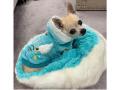【Luna Blue★ルナブルー】Sniffany Cozy Bed(LunaBlue×Susan Lanciコラボ)