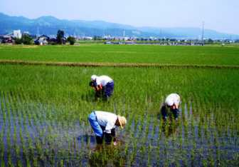 南魚沼塩沢町の田植えの写真