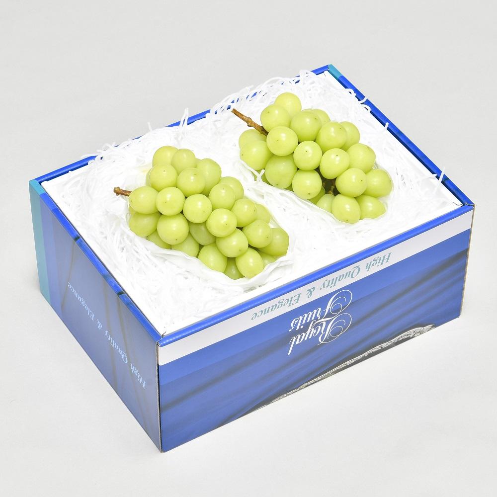 ハウスシャインマスカット 化粧箱 約1.0kg(2房)【227】