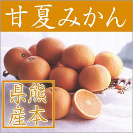 4月中旬~ 熊本県産 甘夏みかん優L 10kg(約30玉)【078】
