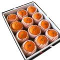 清見オレンジ 3kg(11〜12玉)【037】