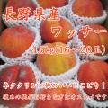 信州産 ワッサー4.5kg(16~20玉)【154】