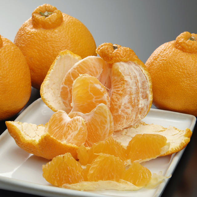 トップオレンジ2.5kg
