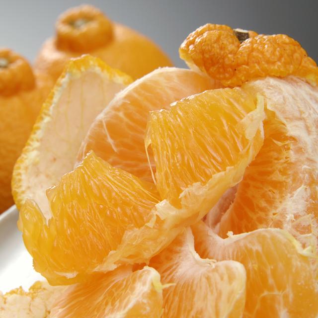 トップオレンジ5.0kg
