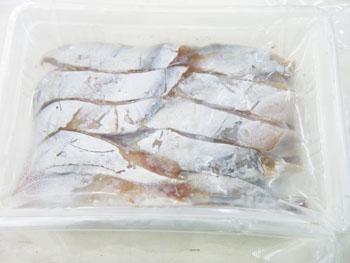 冷凍エサ カツオハラモ