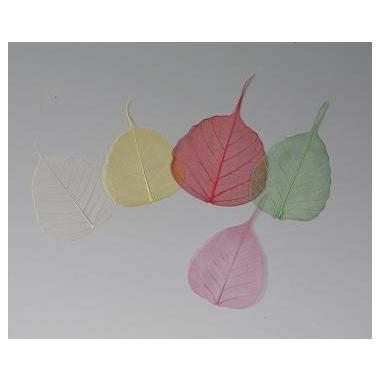 【寺院用仏具】五色の菩提樹(葉脈) 化粧箱入 200枚セット