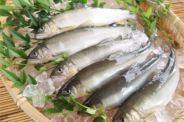 塩焼き用活〆鮎 60~100g (1kgあたり17尾~10尾)