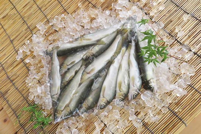 活〆冷凍鮎 90~100g (1kgあたり10~11尾)