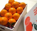 清見オレンジ2L級