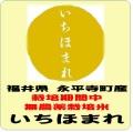 令和元年産 福井県 永平寺町産 いちほまれ 栽培期間中無農薬米(玄米1kg)