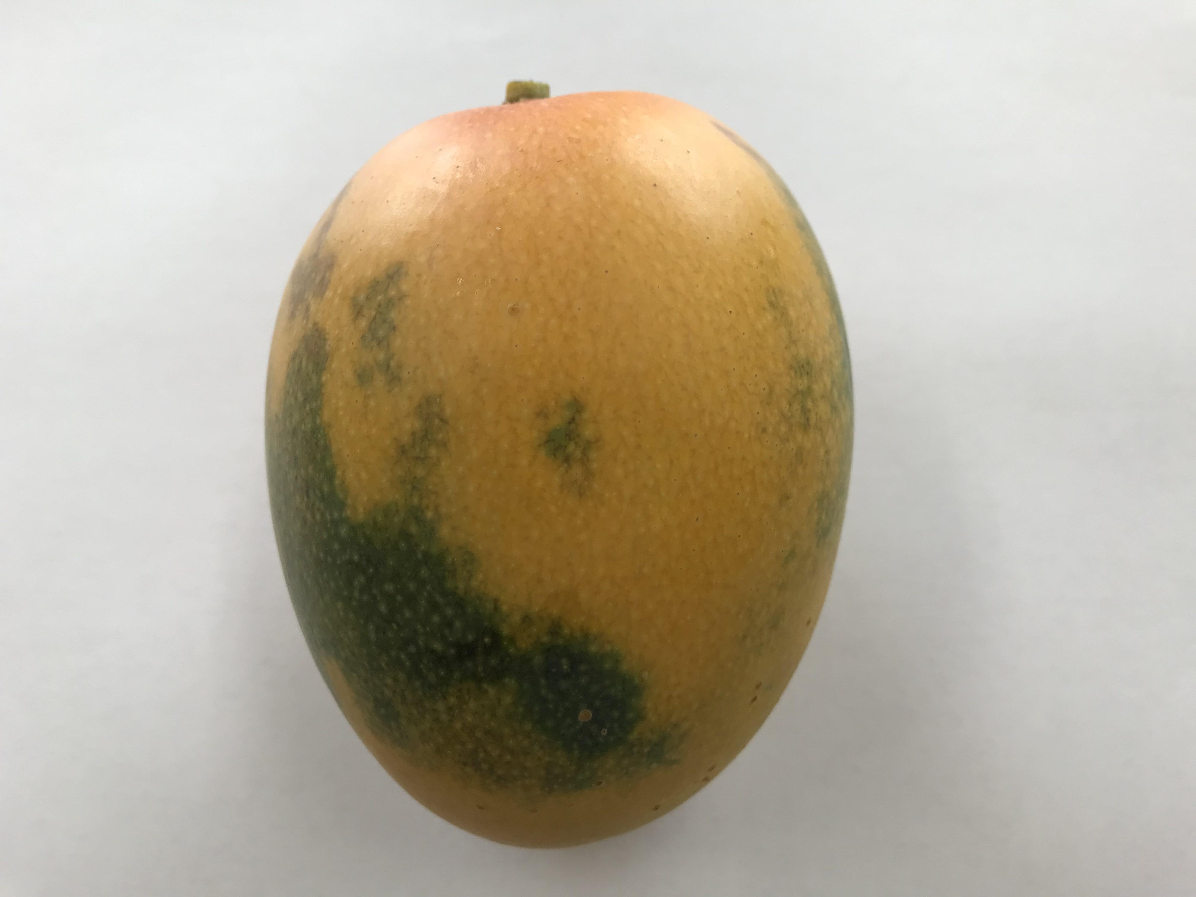 金蜜マンゴー