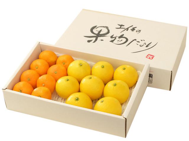 柑橘セット_1