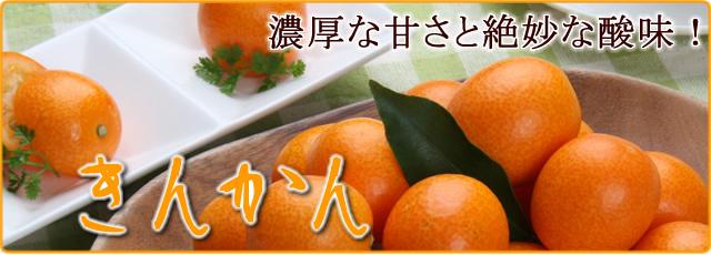 高知産の甘い完熟金柑(きんかん)