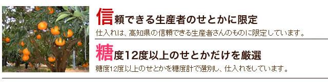 武田青果~Fruit Takeda~の山北産せとか
