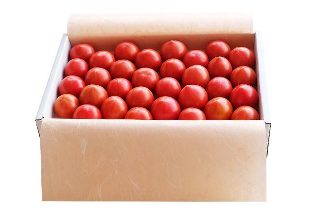 徳谷トマト71番52番 土佐和紙