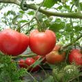 観音トマト