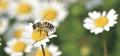 ミツバチを学ぶ・ミツバチに学ぶ