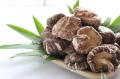 九州産原木栽培!大玉どんこしいたけ! 一口では食べ切れない大玉サイズ「どんこ(4.5cm〜6cm)130g」