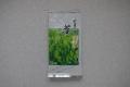 くき茶 100g (高葉)