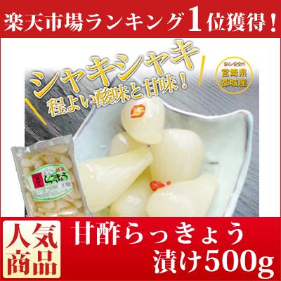 国産甘酢らっきょう漬け 500g【送料無料】