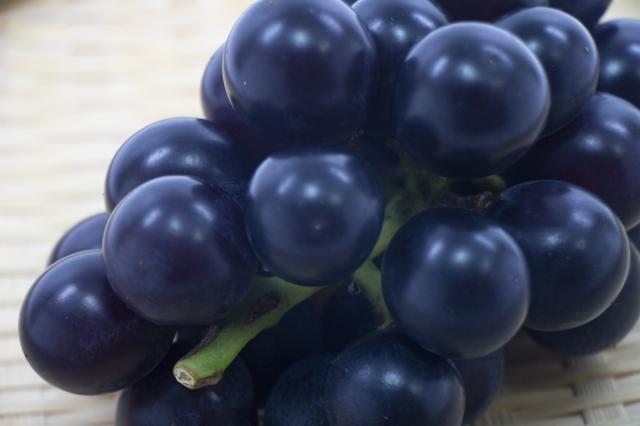 丹後王国,丹後,食,通販,食のみやこ,ぶどう,藤稔,フルーツ,果物