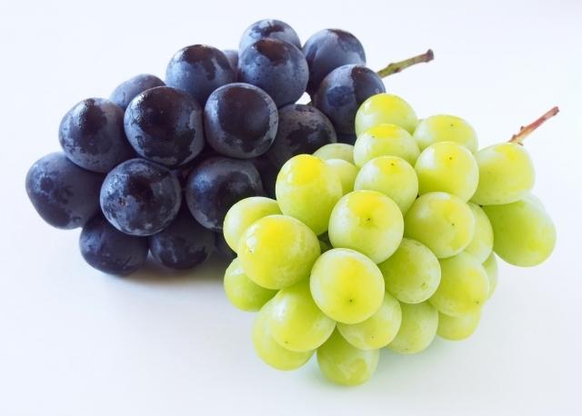 丹後王国,丹後,食,通販,食のみやこ,ブドウ,ぶどう,フルーツ