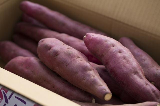 京都の丹後で栽培されたさつまいも 【まいこ金時】5キロ箱【専用箱入り】