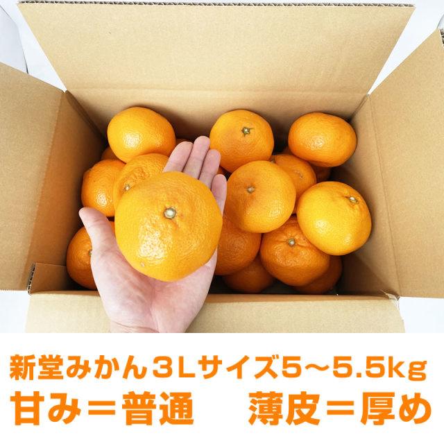『有田の新堂みかん3Lサイズ』