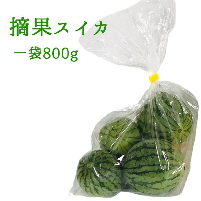 『摘果スイカ』 収穫後、順次発送中※日付指定はできません。