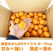 『有田の新堂みかんSSサイズ』