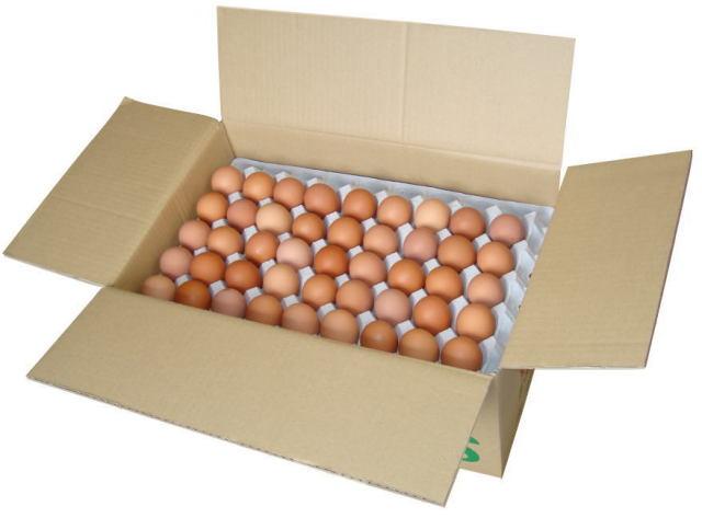 タズミの卵Lサイズ10Kg入り