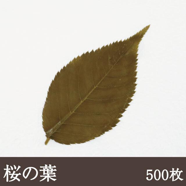 桜の葉(茶色)500枚