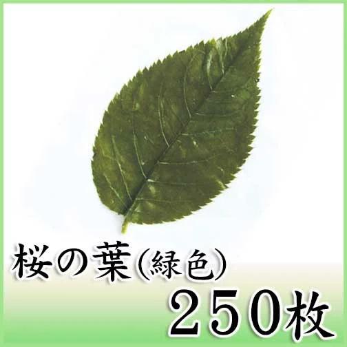 桜の葉 緑色 250枚