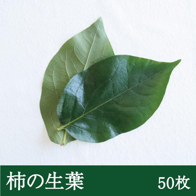 柿の生葉50枚