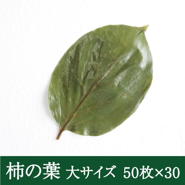 柿の葉大50枚×30